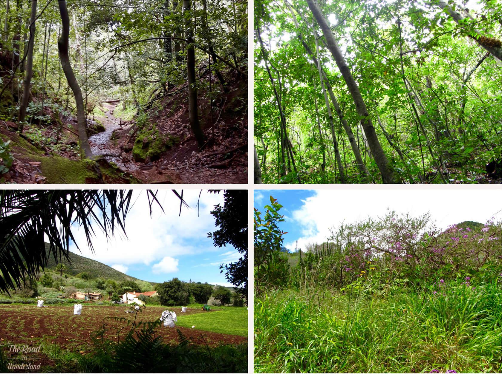 Landscapes at the Finca de Osorio