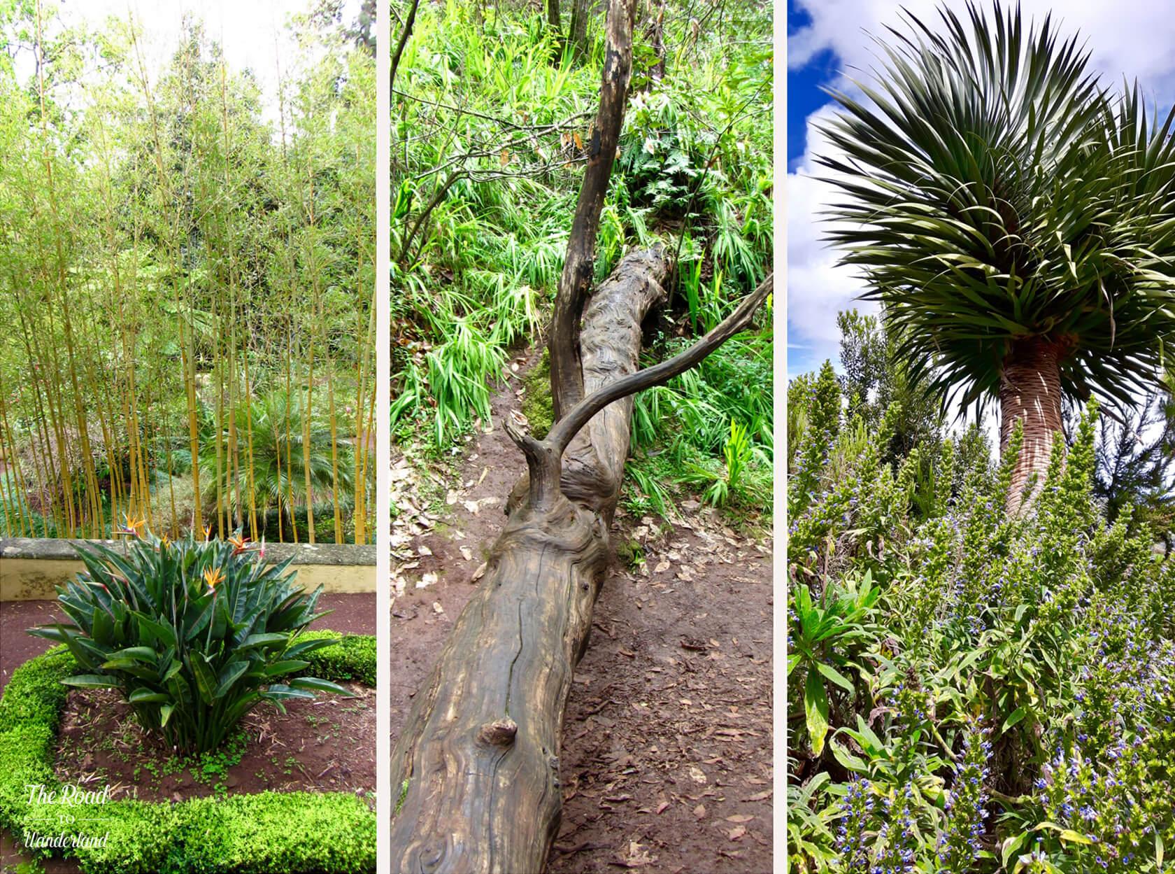 Trees & plants at the Finca de Osorio