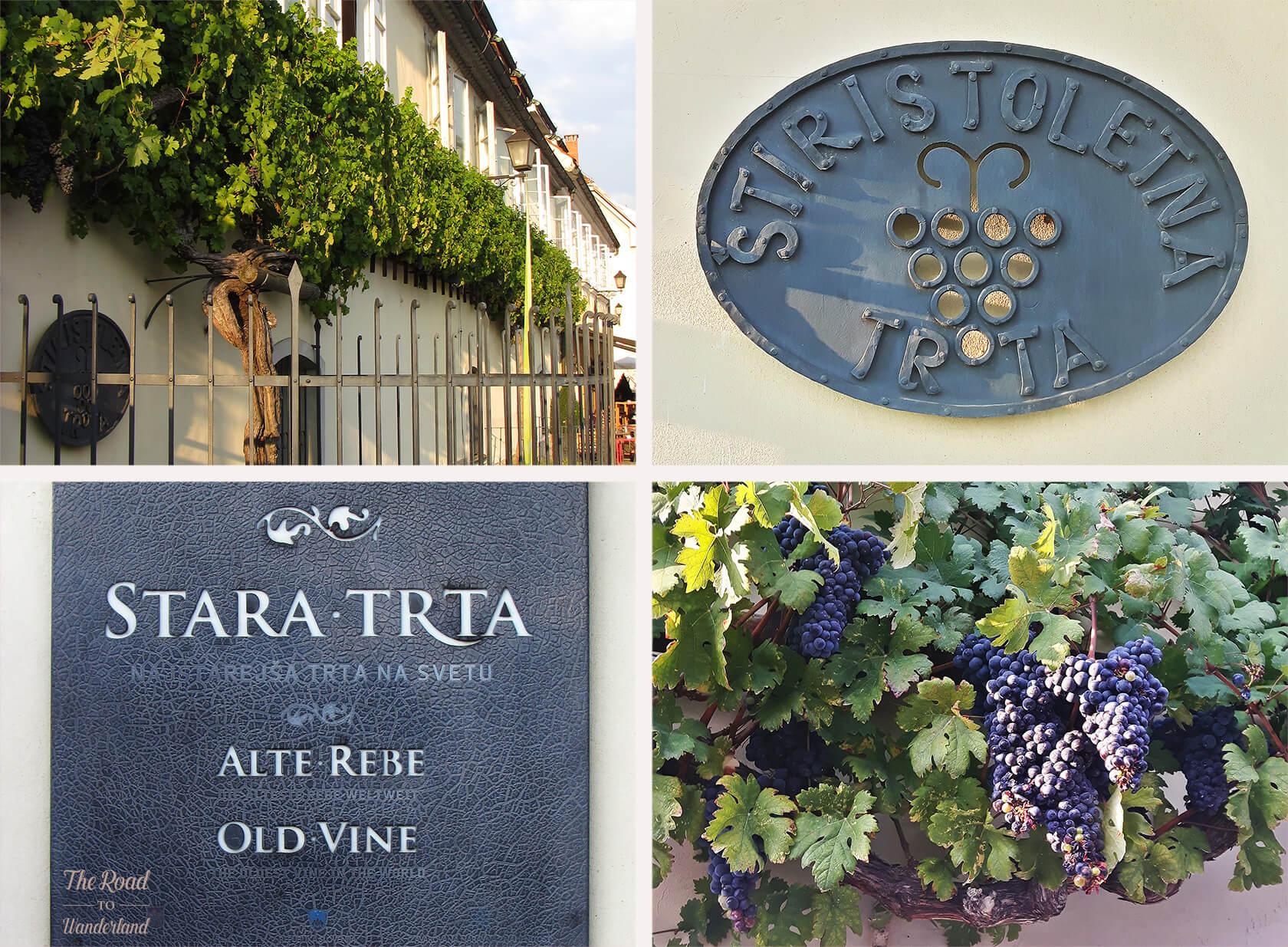 Maribor wine heritage: The Old Vine House