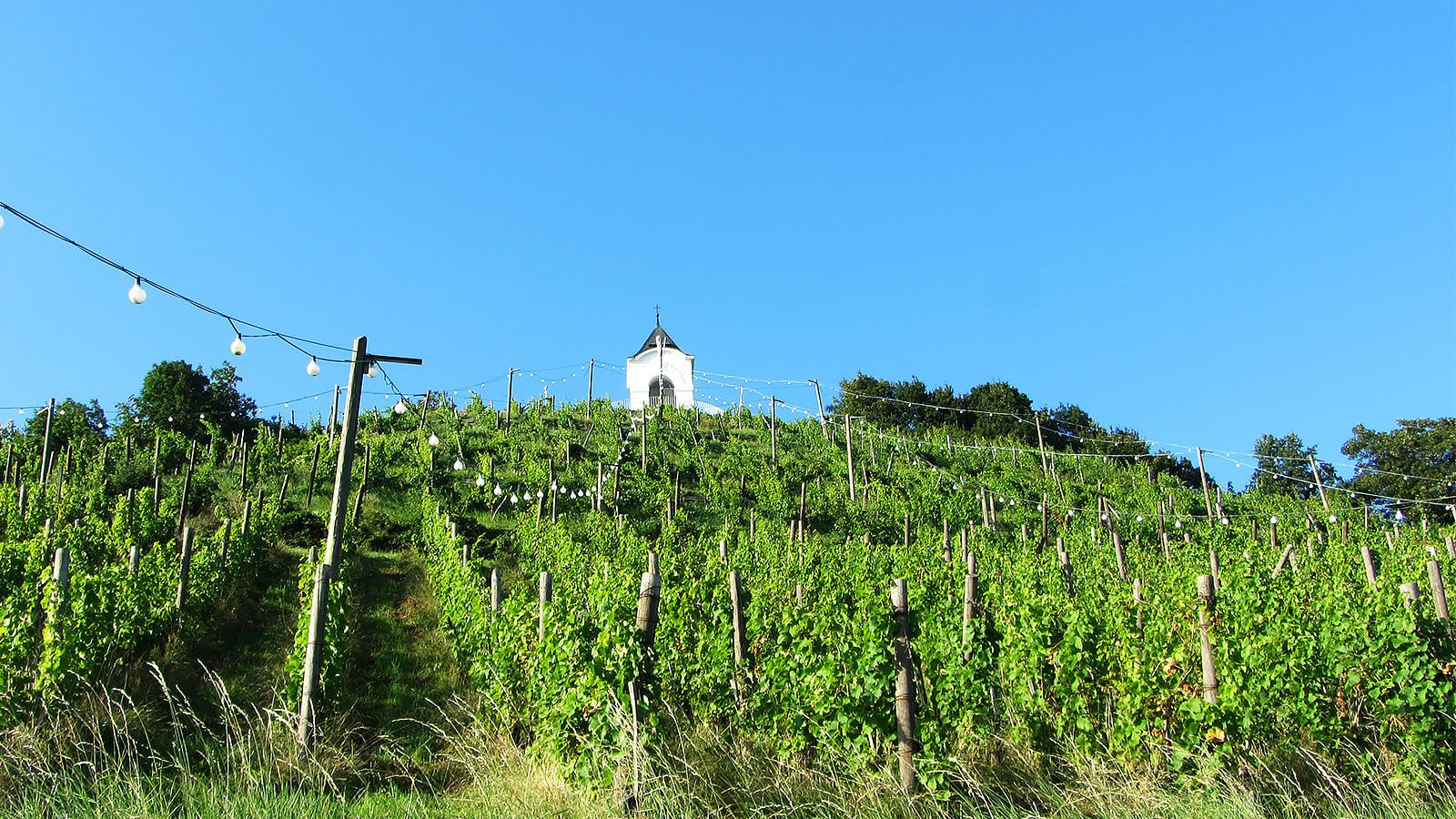 Piramida Vineyards, Maribor