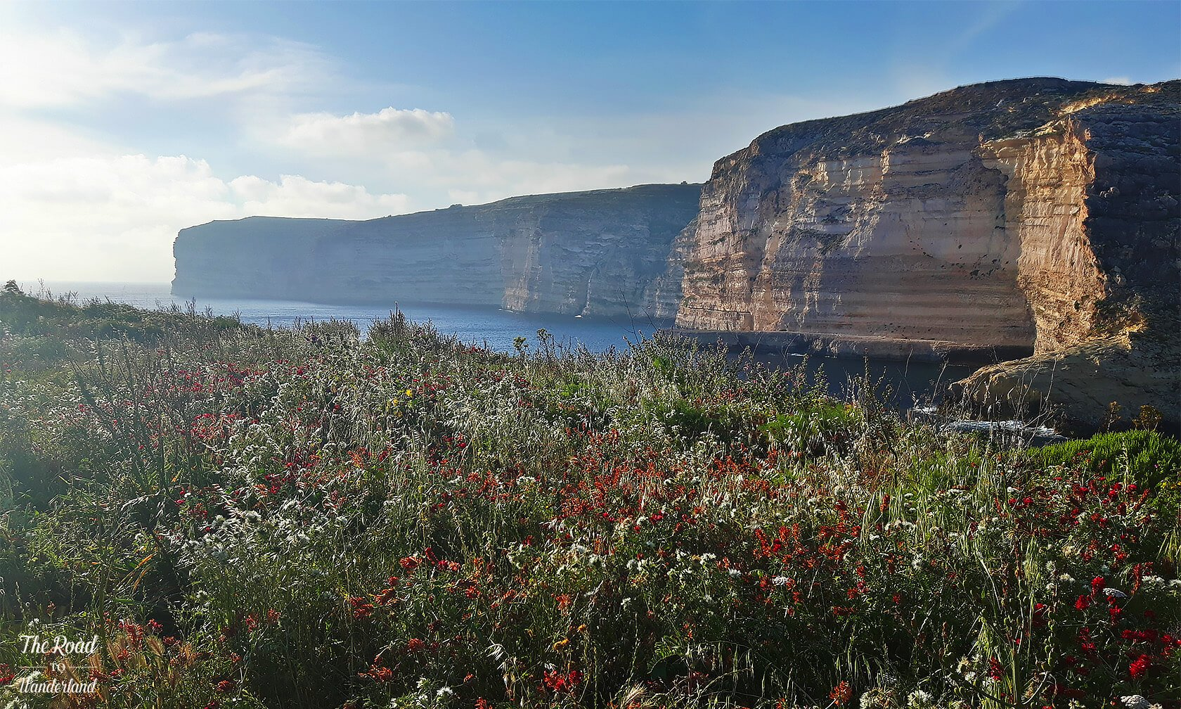 Xlendi cliffs with spring wildflowers