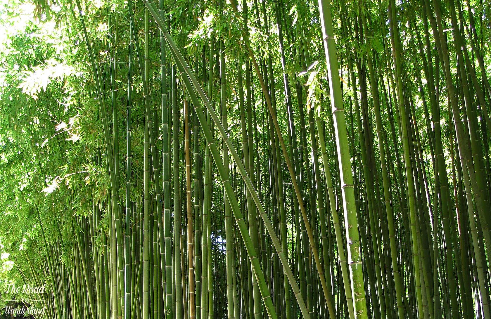 Bamboo Forest, Jardin des Plantes