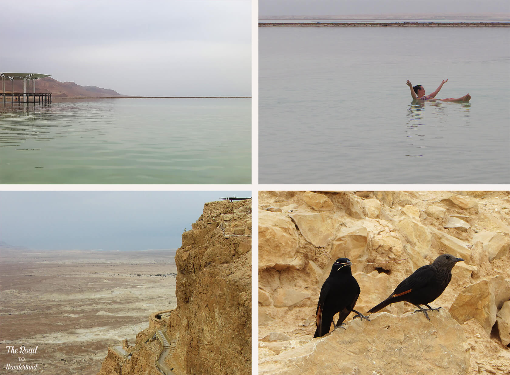Swimming in the Dead Sea, view from Masada, Tristram's starling