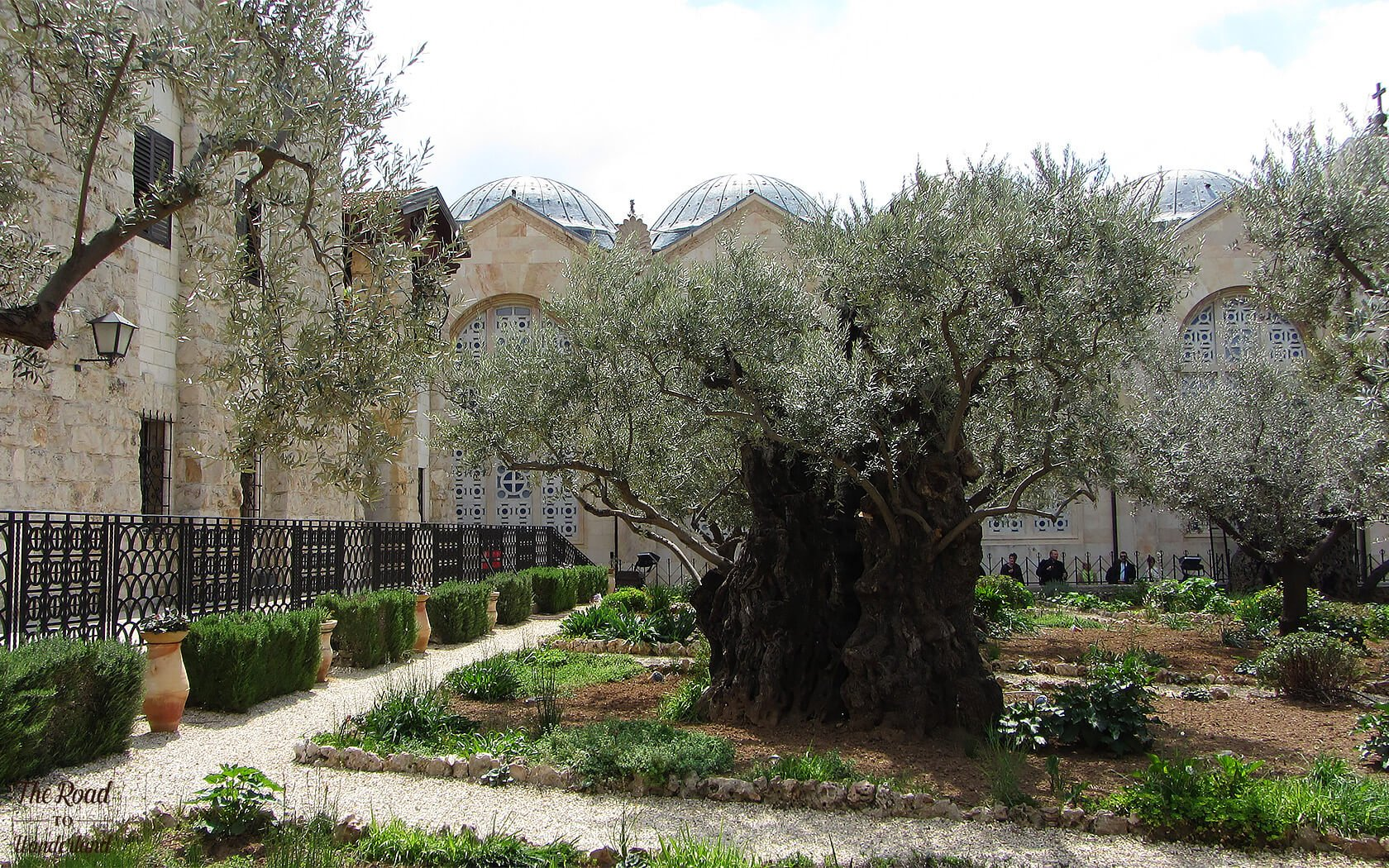 Religious sites in Jerusalem: Garden of Gethsemane