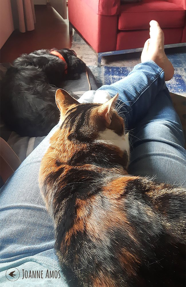 Sitting with Lucy (the cat) on my lap and Oscar (the dog) at my feet