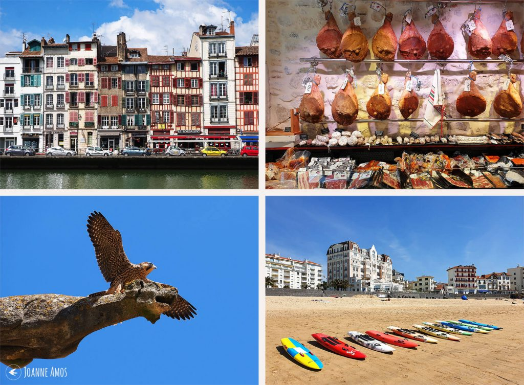 Bayonne 2019: the riverfront; Bayonne ham; surfboards at Saint Jean de Luz; peregrine on Bayonne Cathedral