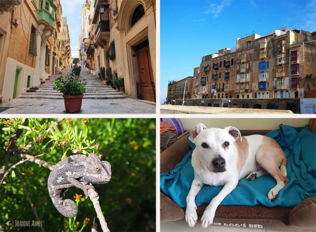 Malta 2019: Ursula Steps, Valetta; harbourside houses; Megan; chameleon at Ghadira Nature Reserve