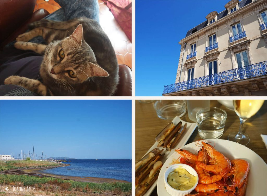 Marseillan 2019: Ziggy the cat; building at Marseillan port; lunch at the beach; the lagoon